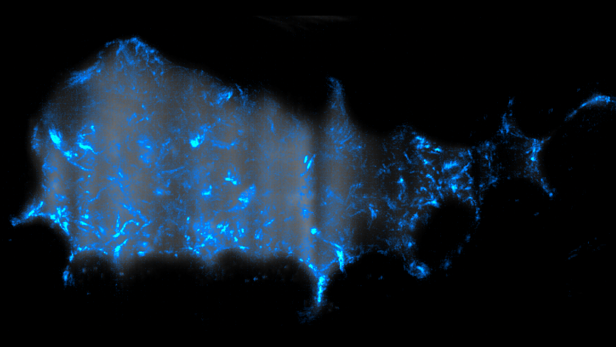 "Trajectories of Vibrio cholerae bacteria (blue) swimming inside the gut of a larval zebrafish.""  Other information: The gut is visible as a gray background. The total duration of the movie that was ""squashed"" into this image is 3.5 seconds, and the total image width is about 0.3 mm."